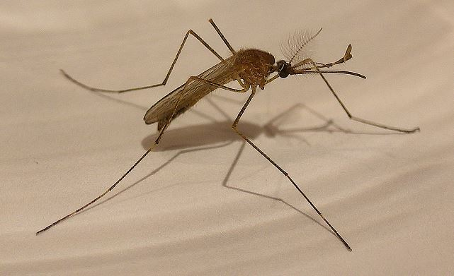 More mosquitoes_ Higher risk of West Nile_130627