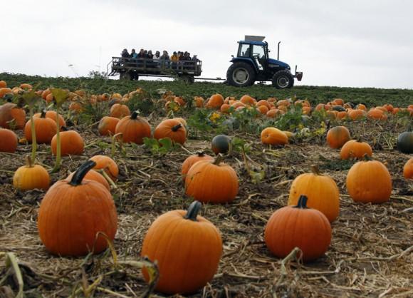 pumpkins_157301