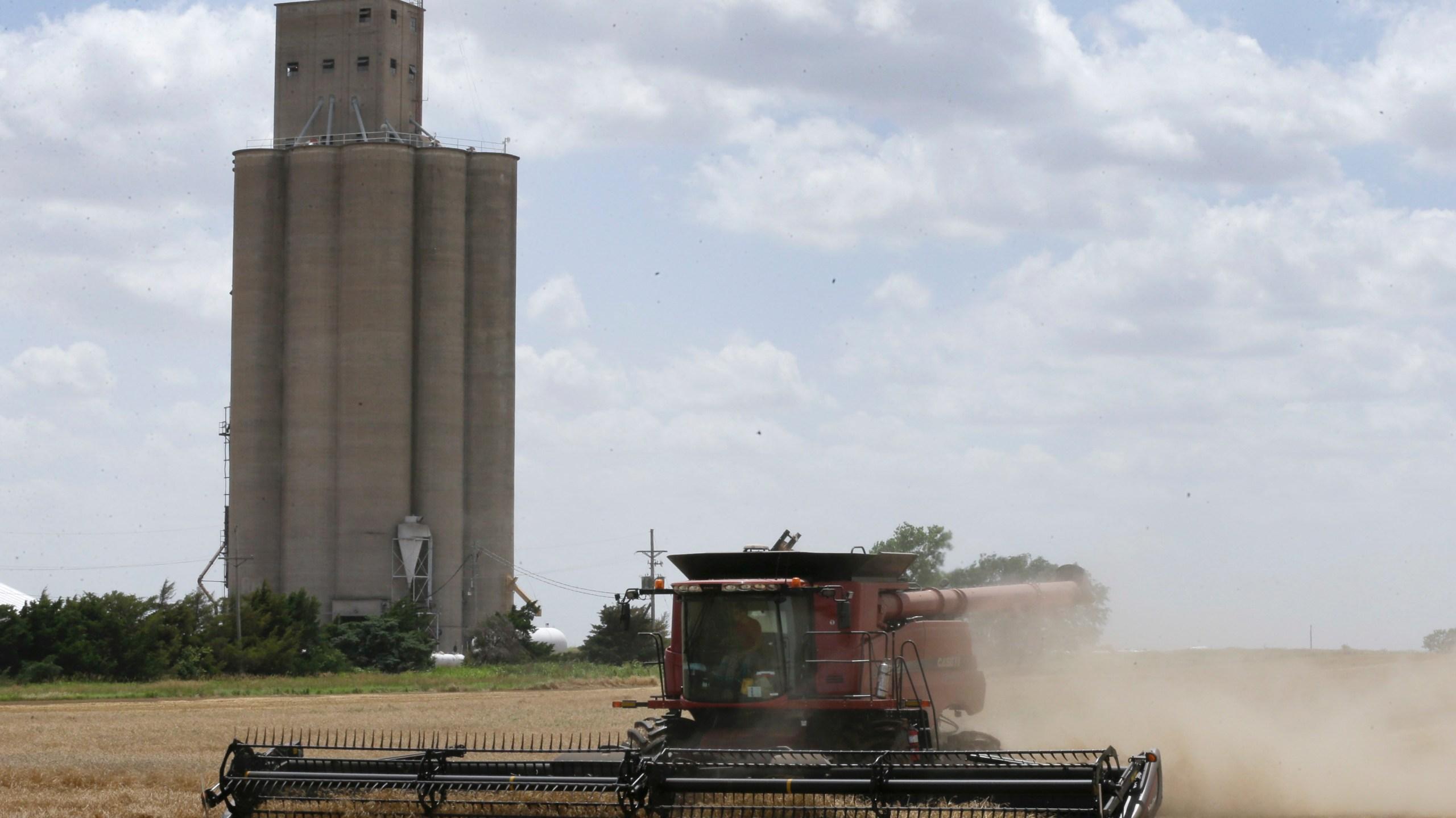 Kansas Wheat_197847