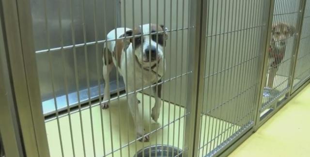 animal shelter_217292