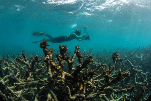 Australia Global Coral Die-Off_259085