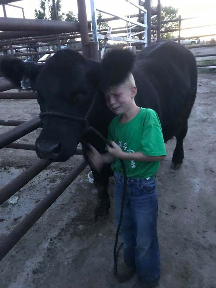 Boy with his cow_315013