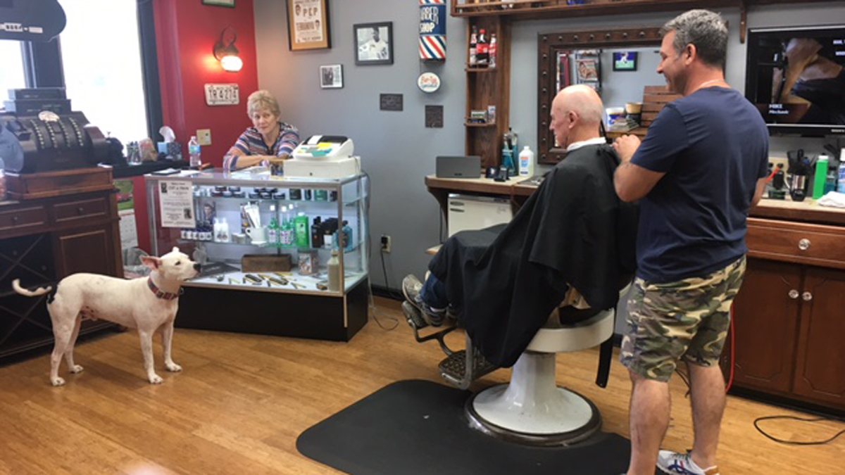 Teddy the Barbershop Dog Is Owner's 'Best Addition' to Business