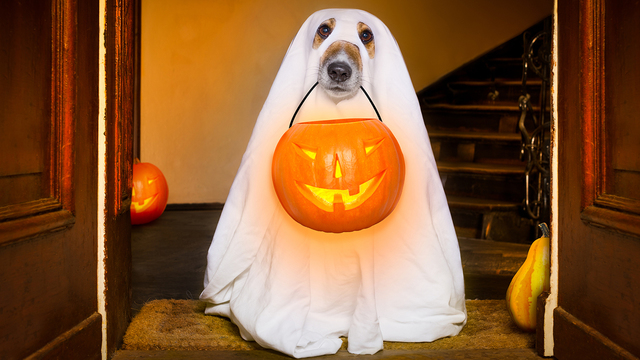 Halloween Ghost Dog Trick Or Treat_351253