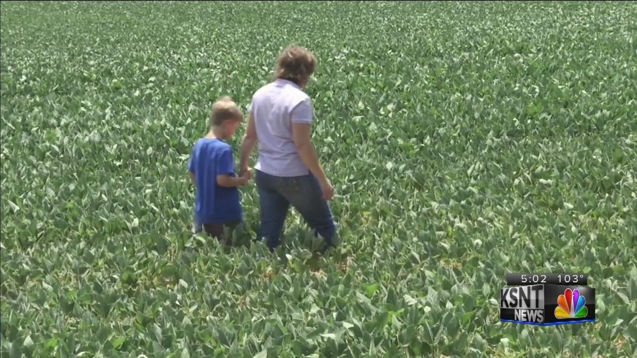 Soybean farmers affected by tariffs