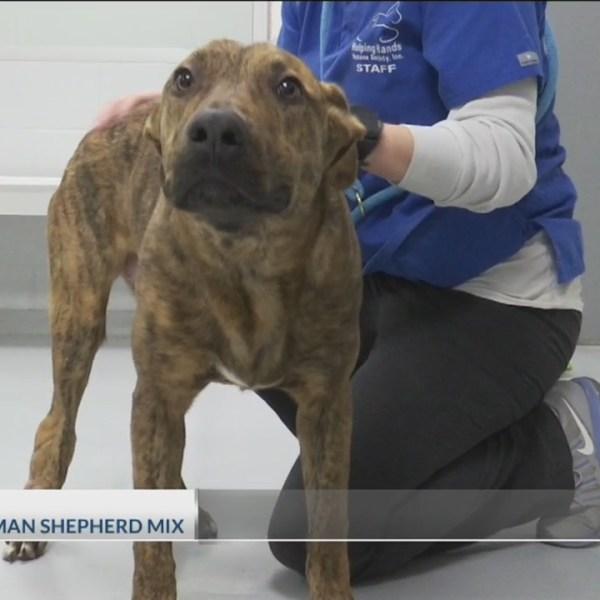 Adopt-A-Pet: January 17, 2019