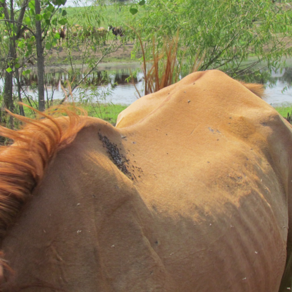 horse3_1550612676476.png