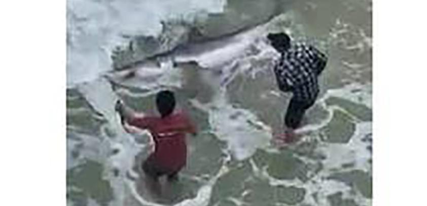 shark caught 2_1551285247192.jpg-118809306.jpg