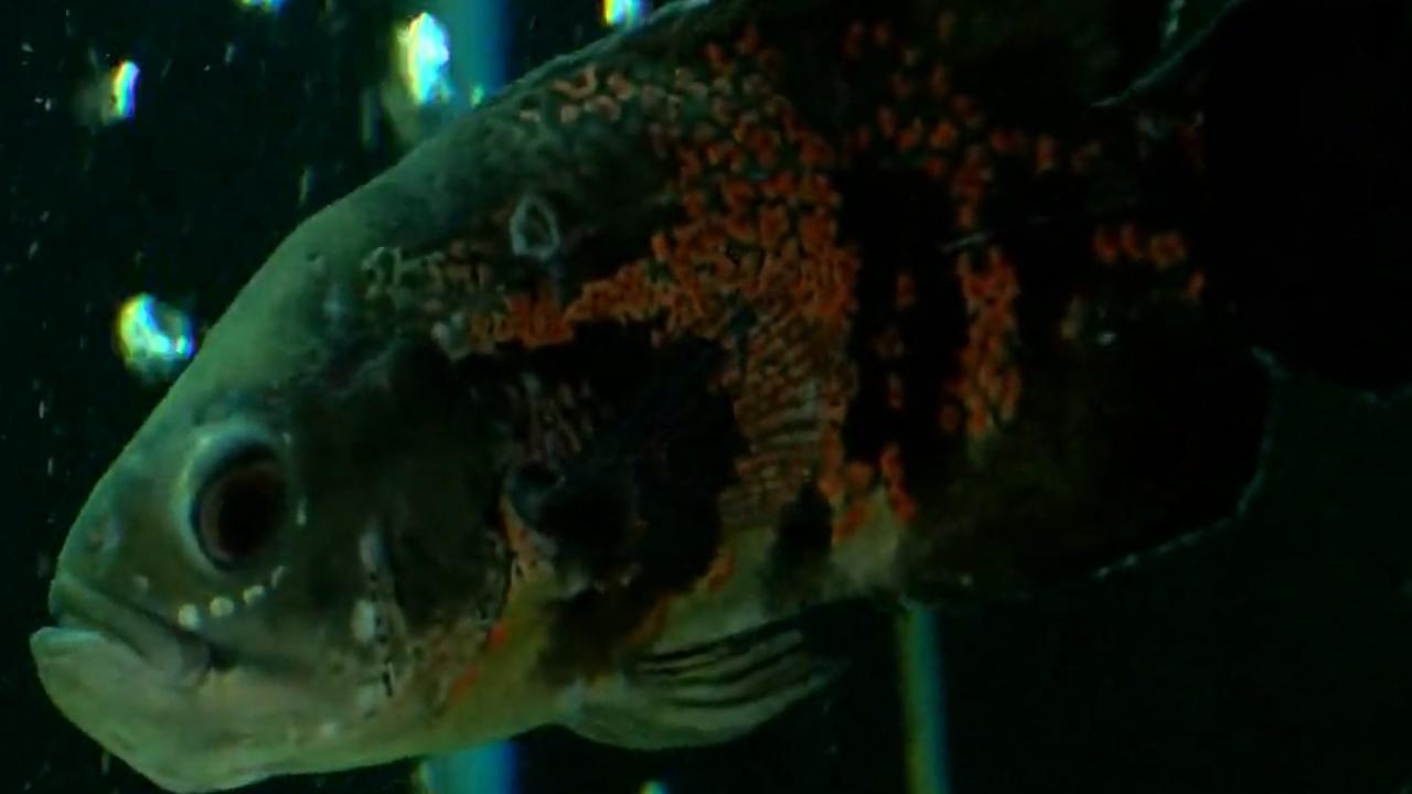 PET FISH_1554741472345.jpg.jpg