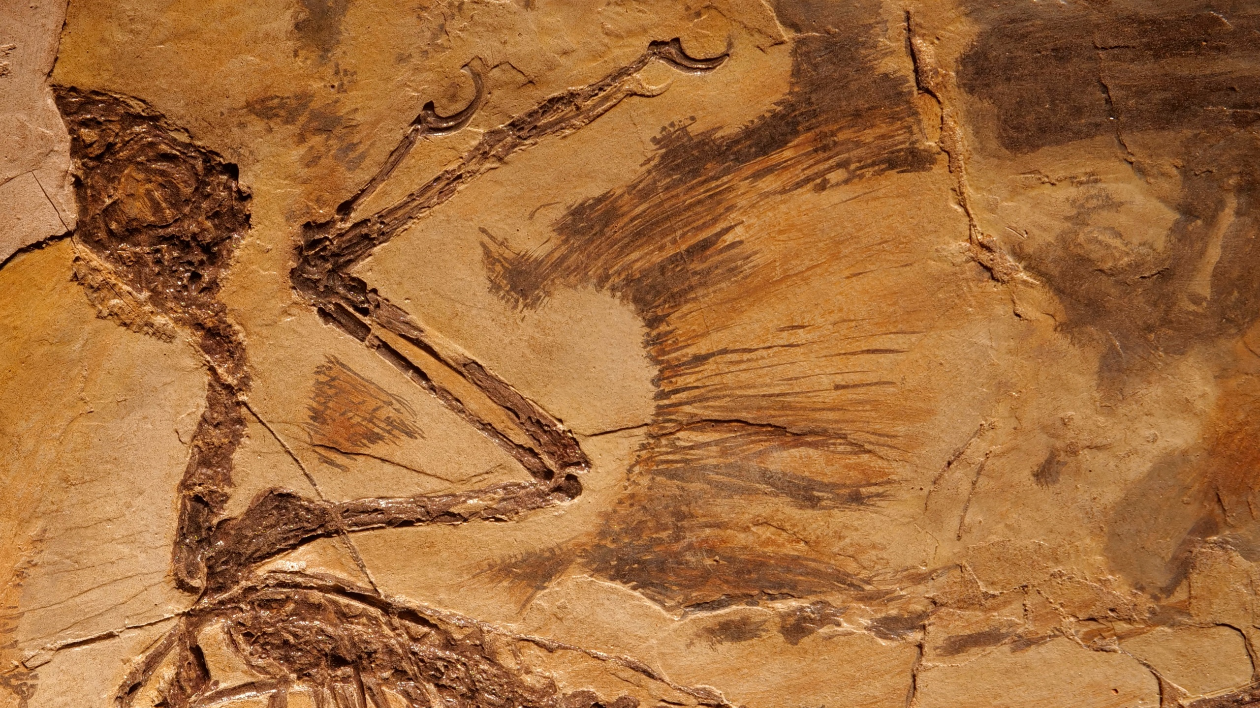 China_Dinosaur_Fossil_Hunter_36746-159532.jpg03792708