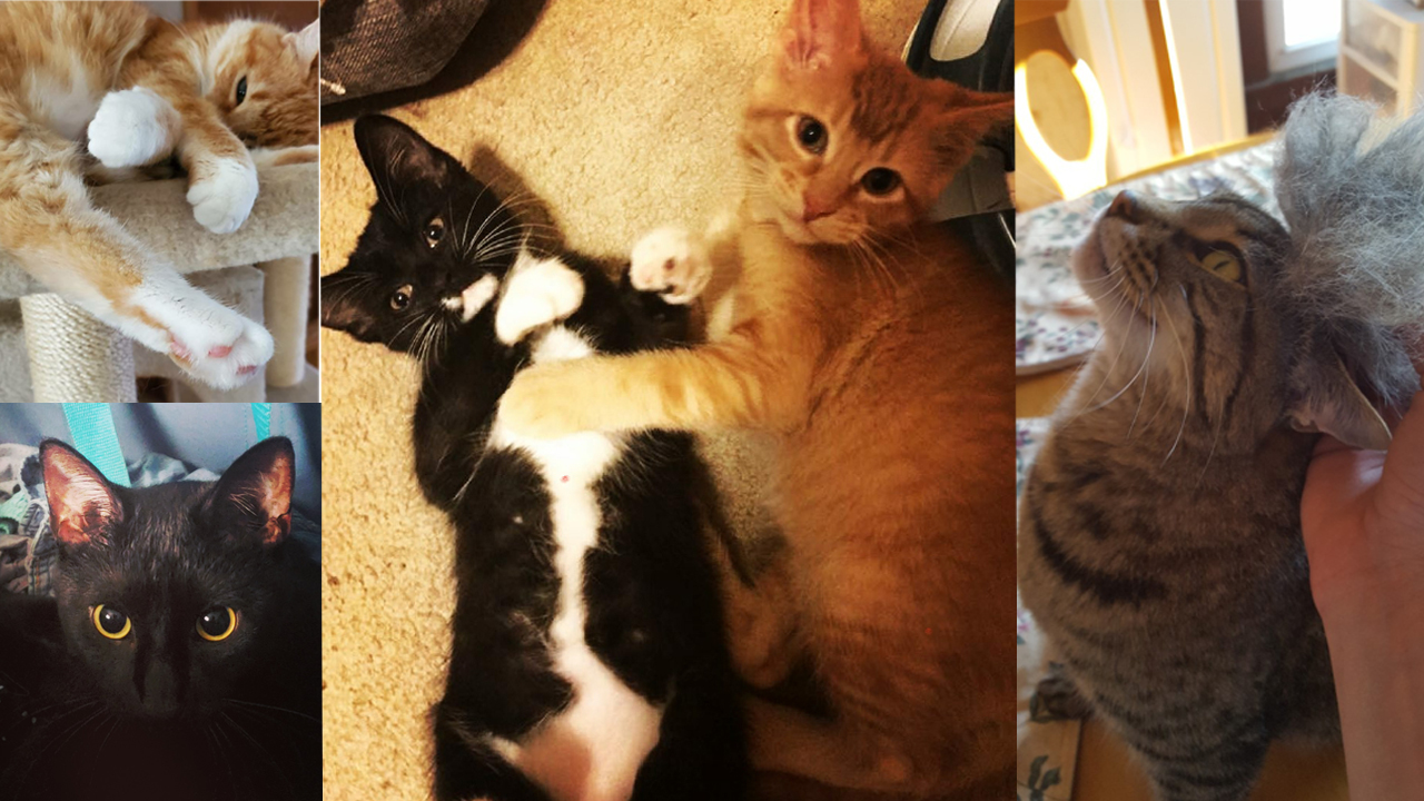 Photo Gallery Happy National Kitten Day From The Ksnt News Team Ksnt News